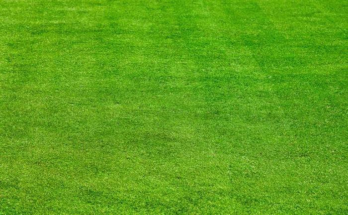 结缕草草坪