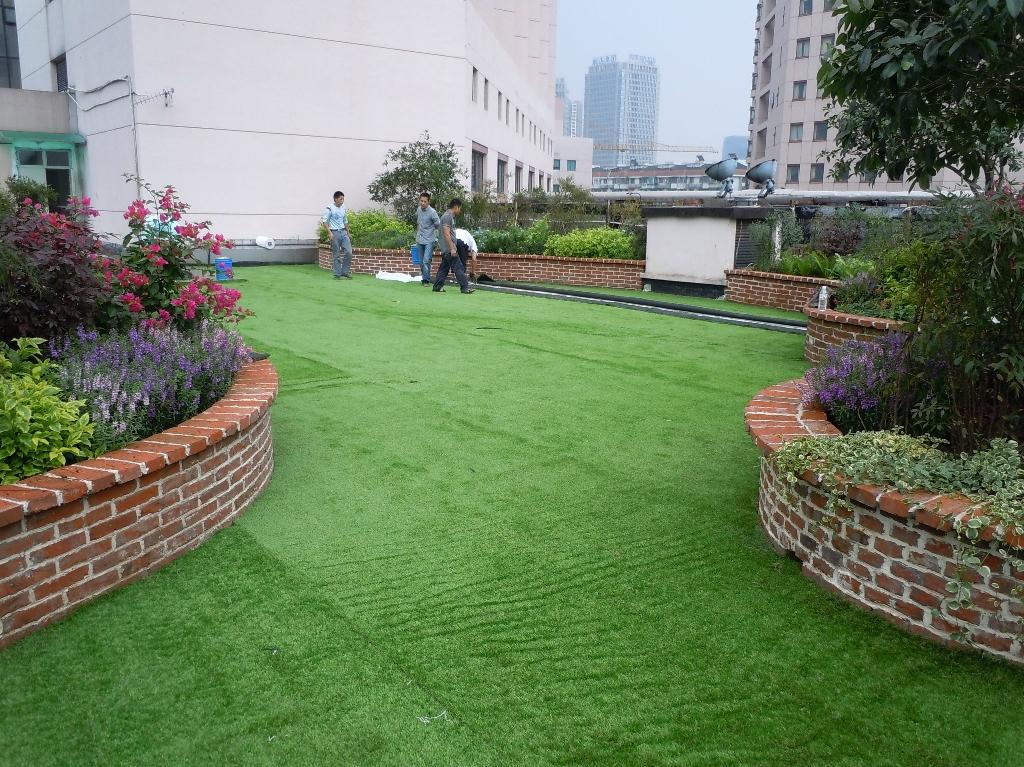 北京草坪价格