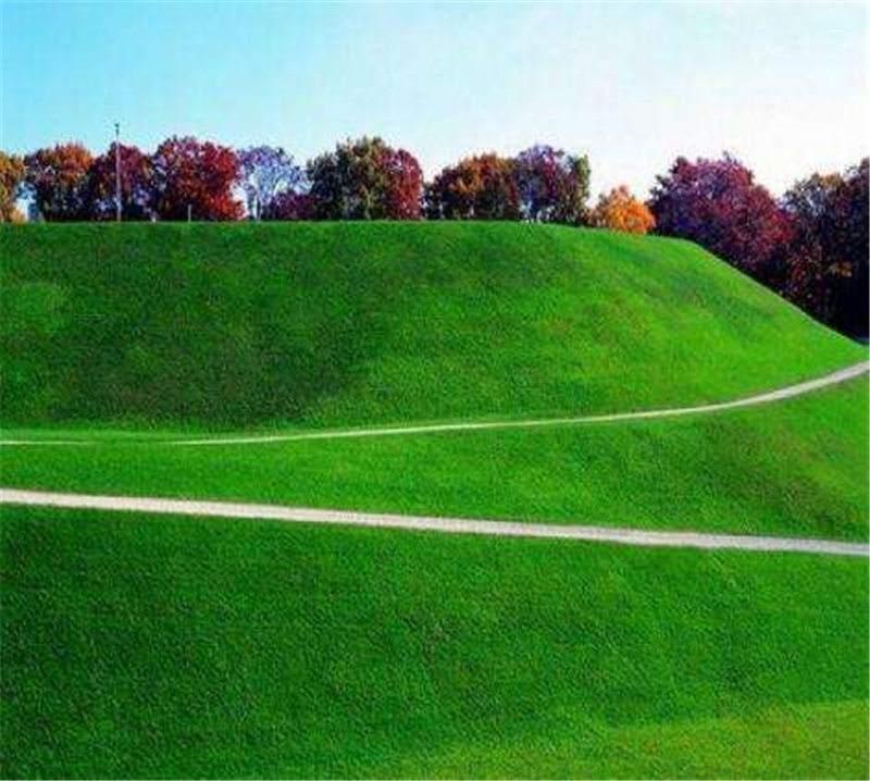 句容草坪基地