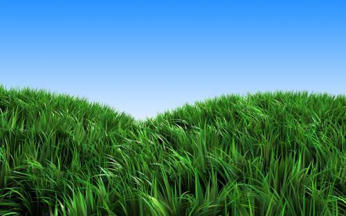 人造草坪的优势和特点