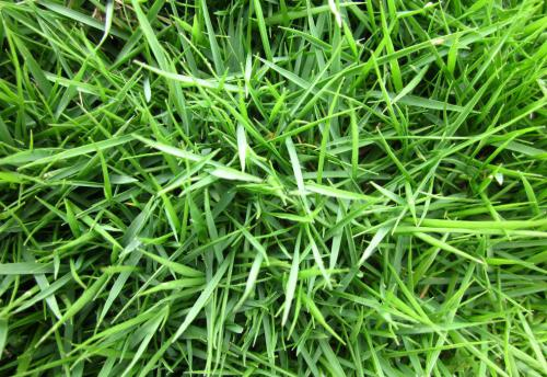 草坪除杂草的方法