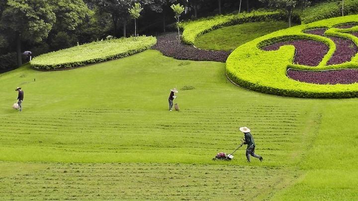 草坪修剪的主要作用有哪些?