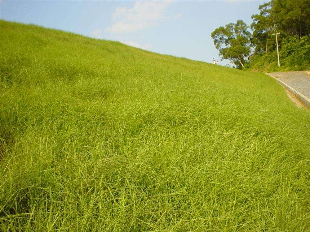 为什么草坪老是发黄,不够美观?