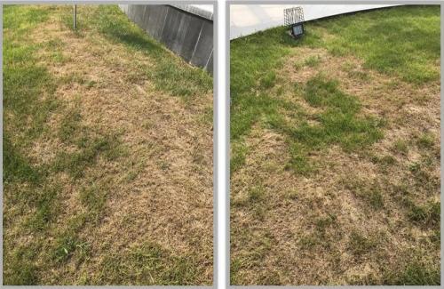 游乐园绿化人造草坪