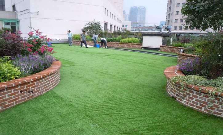 草坪卷多少钱一平方米