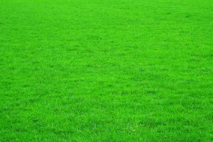 草坪绿化多少钱一平方米