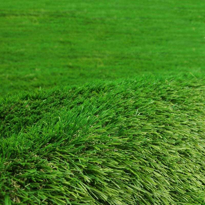 屋顶草坪用什么草好