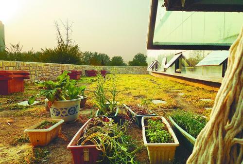 屋顶草坪覆土厚度