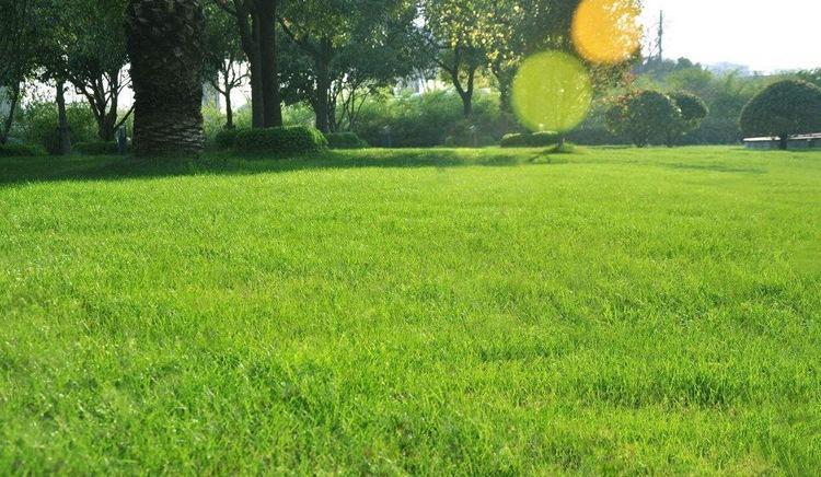 护坡草坪种子