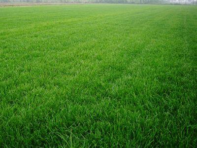 草坪种植过程