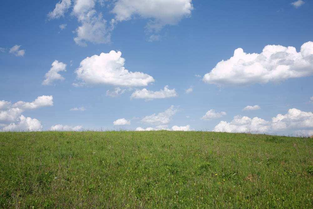 种草养牛容易错入的七大误区