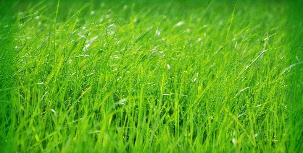 草坪的合理灌溉