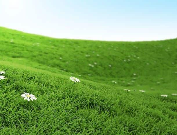 草坪如何使用多效唑