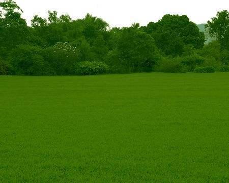 北方基地草坪病害原因