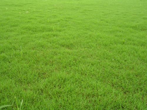 冷季型草坪的养护技巧