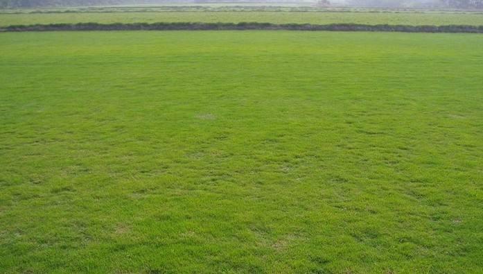 如何给草坪补充养分