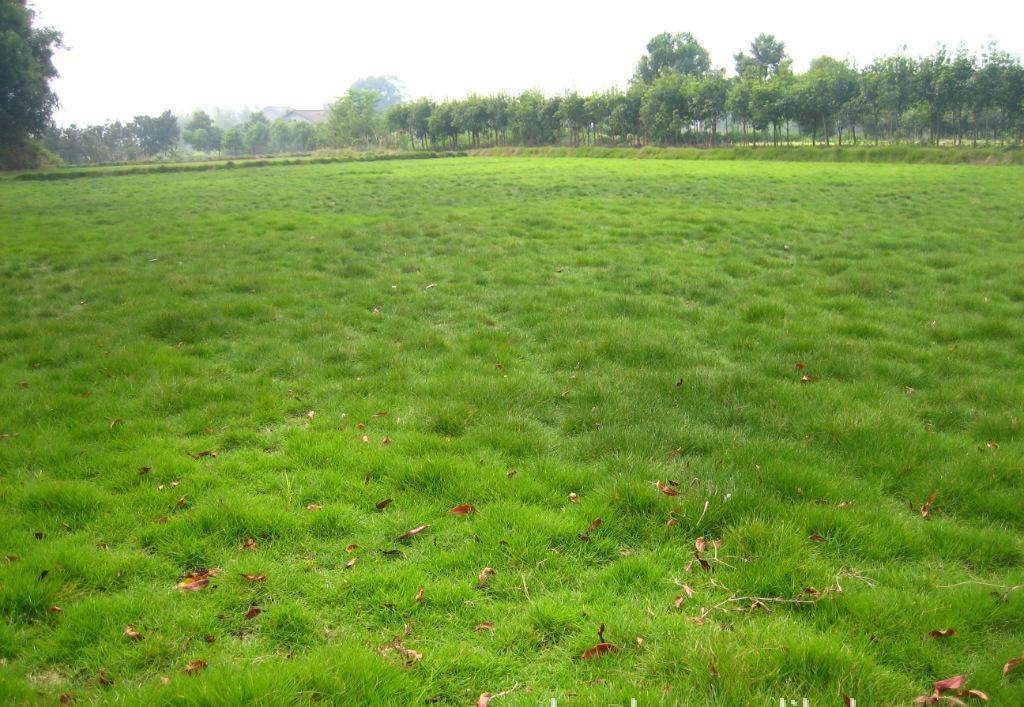 草坪修剪的方向