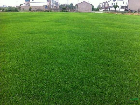 草坪施肥技术
