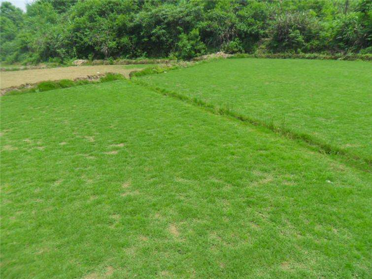 草坪病虫害防治