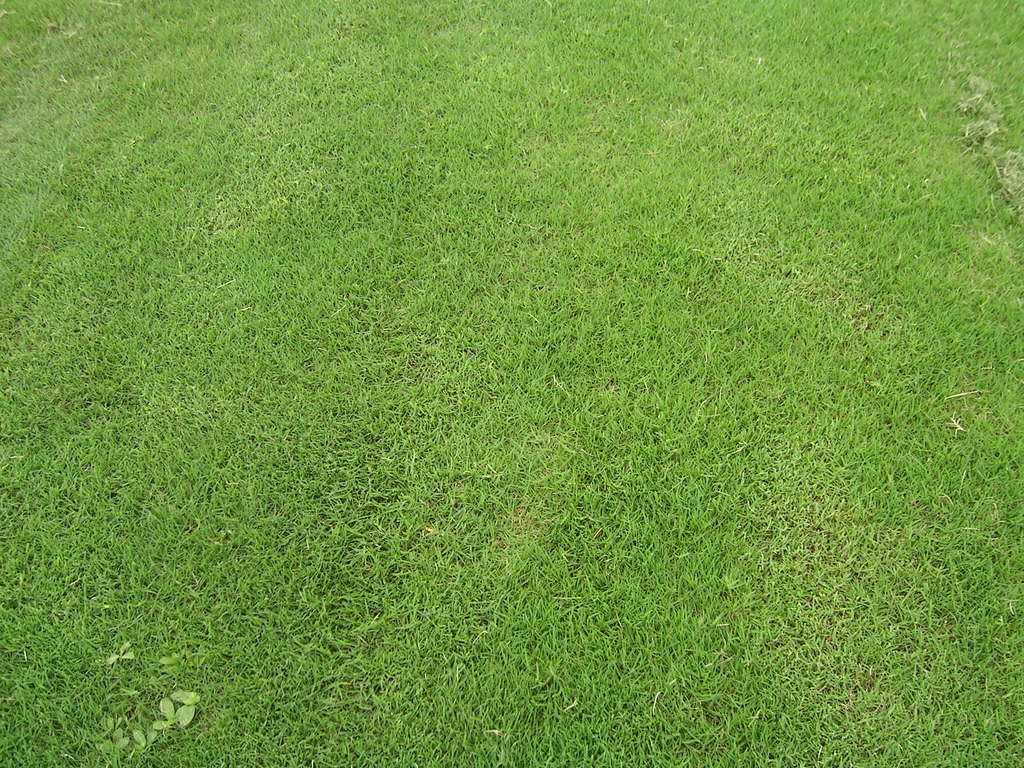 草坪草修剪原则与方法