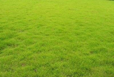 苗圃草坪不宜使用除草剂