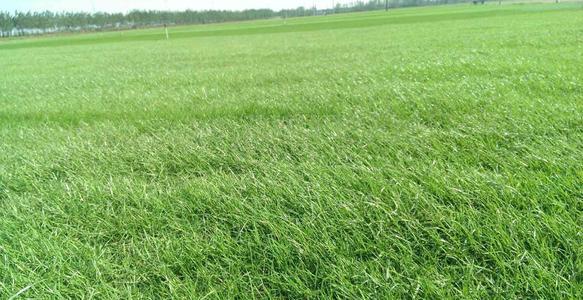 草坪质量下降后
