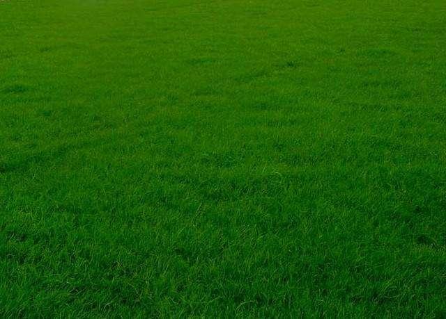 地毯式混凝土草坪