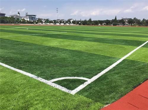 足球场用什么草