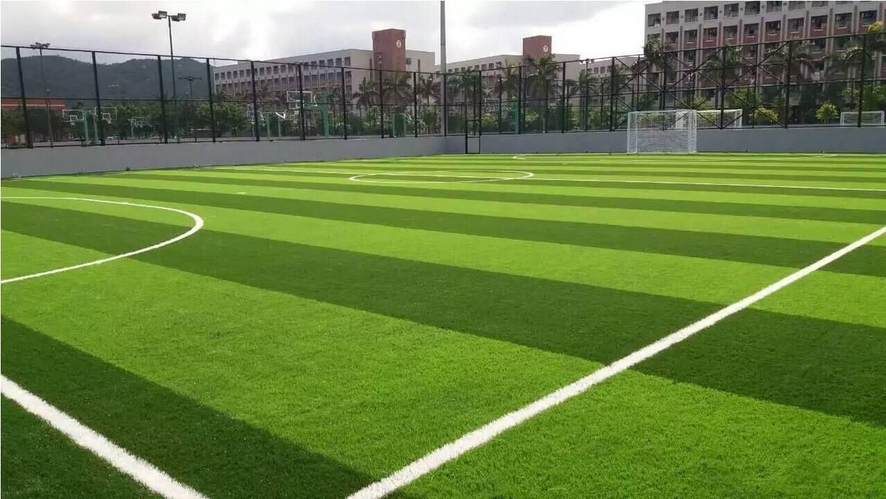 免填充型足球场地草坪