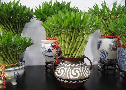 室内植物的养护